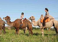 Eine Gruppe reitet auf einem Kamel